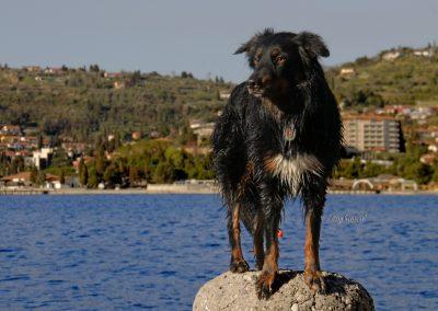 Pasji horizont, Portorož, pes pozira