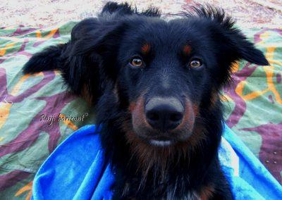 Pasji horizont, Premantura, pes gleda v kamero