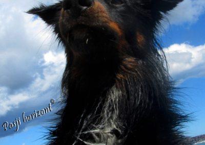 Pasji horizont, Premantura, pes pod oblaki