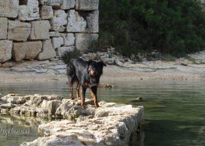 Premantura, pasji sprehod po obzidju