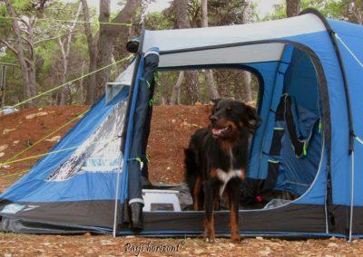 Pasji horizont, kampiranje v šotoru s psom