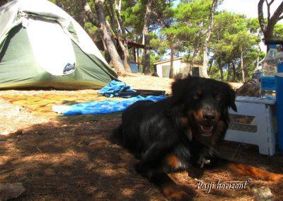 Premantura, kampiranje s psom