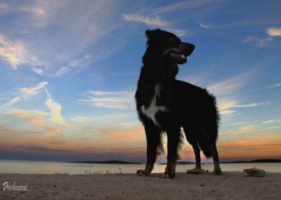 Pasji horizont, Premantura, sprehod ob sončnem zahodu