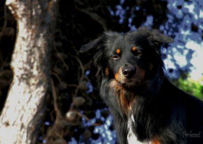 Pasji horizont, Premantura, pasji portret