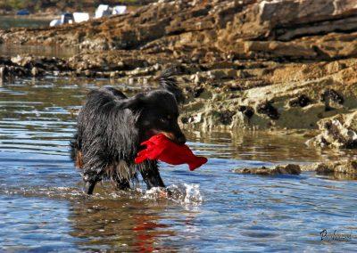 Pasji horizont, Premantura, pes v vodi z igračo