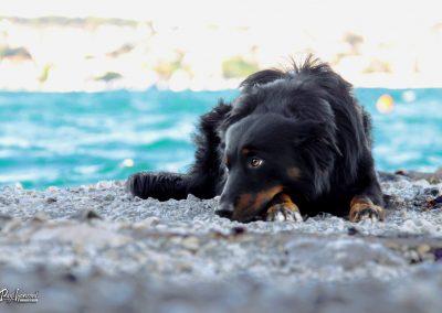 Pasji horizont, Premantura, pes poležava na obali