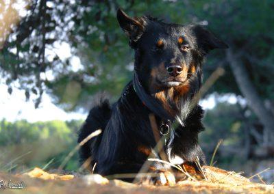Pasji horizont, Premantura, pasje poziranje v kampu