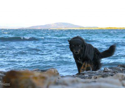 Premantura, kampiranje s psom; obala