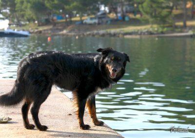 Pasji horizont, Premantura, pes na pomolu