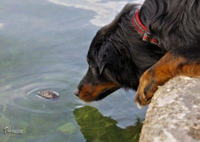 Pasji horizont, Premantura, pes in morje
