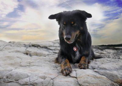 Pasji horizont, Premantura, pasje poziranje na kamniti plaži