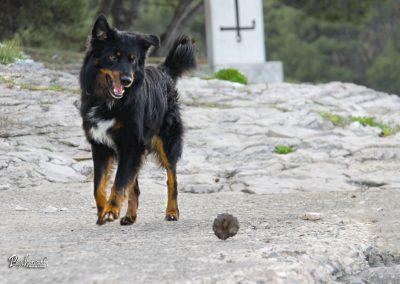 Pasji horizont, Premantura, pasja igra na obali