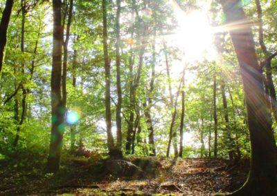 Rašica, jesenski gozd