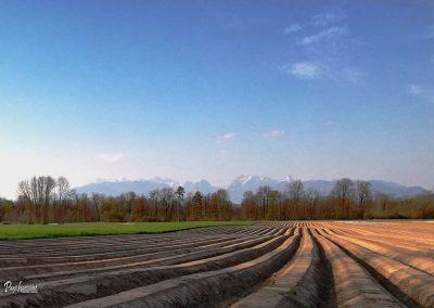 Zorano polje