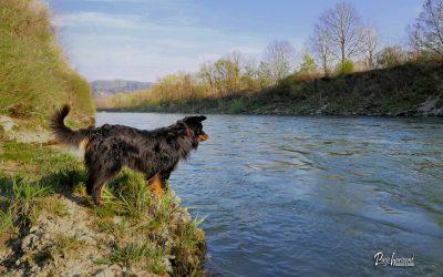Reka Sava, pomladni Coronski sprehod