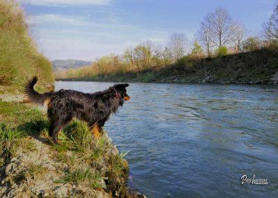 Izlet Reka Sava razgled
