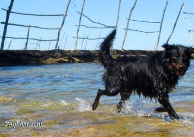 Savudrija, Besanija, kampiranje s psom