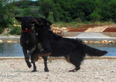 Savudrija, Besanija, pasja igra