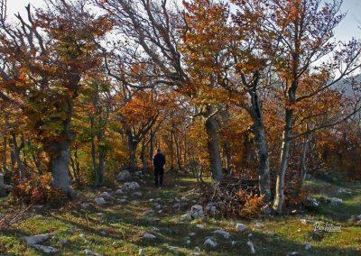 Sinji vrh; gozd