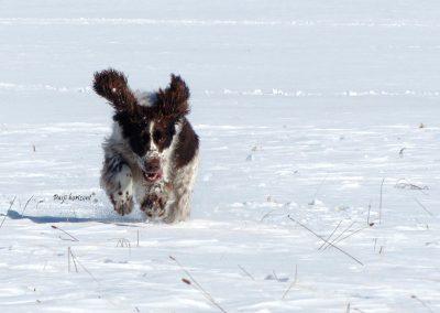 Rakitna; sneg, pes, zima