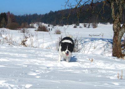 Rakitna, pes na snežni poljani