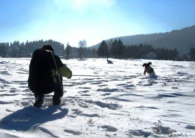 Rakitna; snežno fotografiranje psov