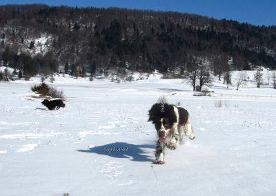 Pasji horizont, Rakitna, pasji snežni tek