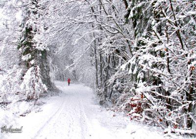 Snežna Sračja dolina