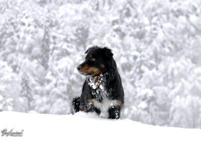 Pasji horizont; snežni trenutki