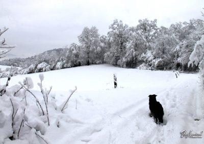 Izlet Rašica; vas v snegu
