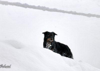 Pasji horizont, sprehod v snegu