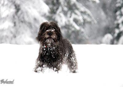 Pasji horizont; pasji snežni portret