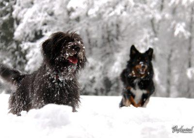 Pasji horizont; psi tečejo v snegu