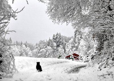 Sračja dolina; koča v snegu