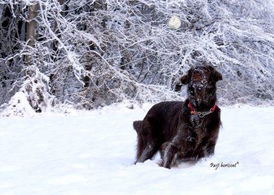Pasji horizont, lovimo snežne kepe