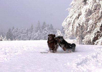Sračja dolina; snežna pasja igra