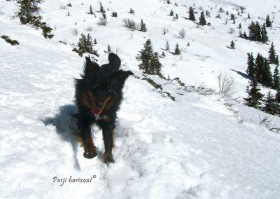 Sneg, zadaj Veliki Snežnik, Pasji horizont