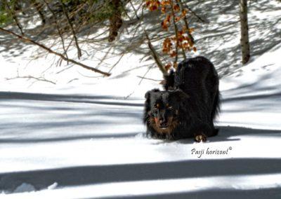 Ob poti na Snežnik, sneg, Pasji horizont