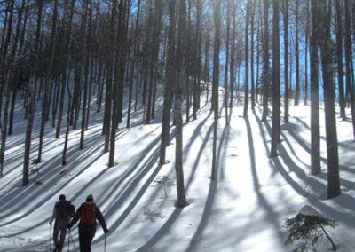 Zasnežena pot na Snežnik, gozd