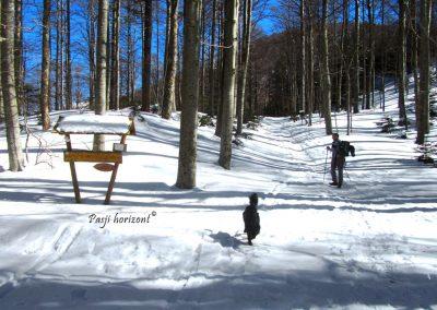 Zasnežena pot na Snežnik, gozd, smerna tabla