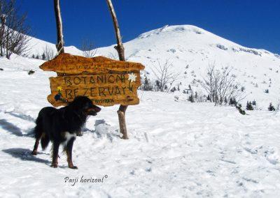 Pod Velikim Snežnikom, Botanični Rezervat