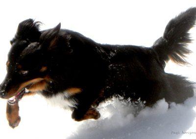 Sveti Jakob, snežni užitki, Pasji horizont