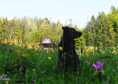 Trupejevo poldne, Srednji vrh, pastirska koča