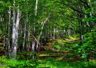 Trupejevo poldne, gozd
