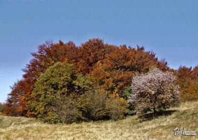 Vremščica, jesen, oranžna drevesa