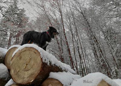 Rašica, na hlodih, zima in sneg