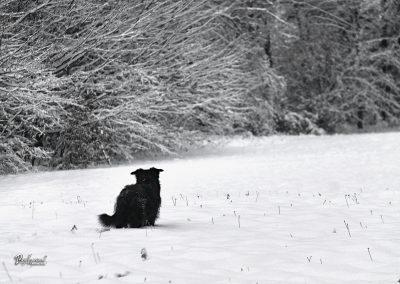 Rašica, zima, sneg do kolen, jasa