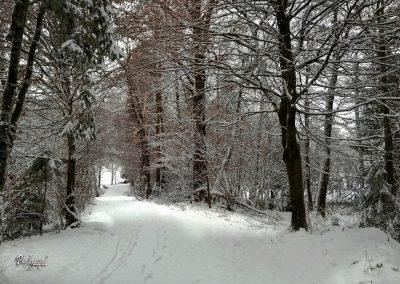 Izlet Rašica, pot, zima in sneg