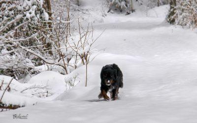 Rašica, zima, cel sneg