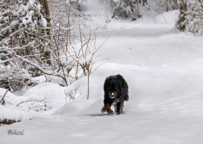 Izlet Rašica, zima, gazenje po celem snegu